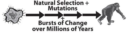 seleção natural + mutações